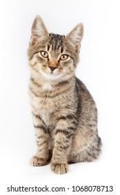 portrait of a thoroughbred striped funny cat (isolated on white background)