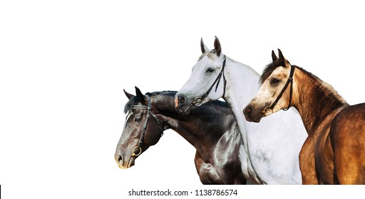 Portrait of three different horse suits isolated on white background