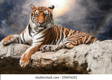 portrait of tiger lie down on rock with ray and spectacular sky