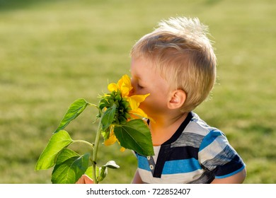 Portrait of toddler child outdoors. Rural scene with one year old baby boy looking at sunflower