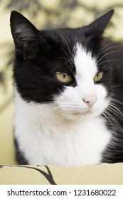 Portrait of a tomcat