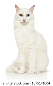 Portrait of a Turkish Angora cat on white background. Animal themes, front view