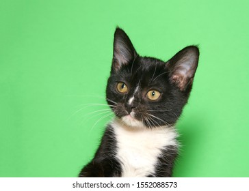 Portrait of a tuxedo kitten looking to viewers left. Green background with copy space.
