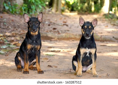 Portrait of two black puppies.