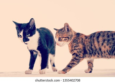portrait of two cat children in front white  background