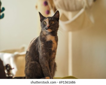 portrait of two colored cat