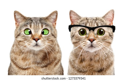 Portrait of two cute cats with eye diseases isolated on white background