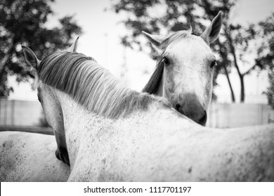 Portrait of two horses indoor in a riding hall