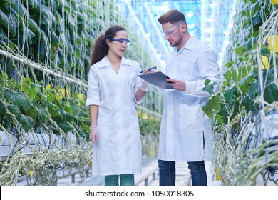 Portrait of two modern scientists studying selection of vegetables in greenhouse of agricultural plantation