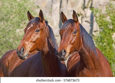 Portrait of two nice horses posing
