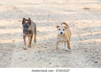 Portrait two puppy dog