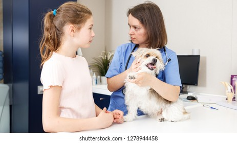 Portrait of upset girl concerned about health of her dog, consulting by veterinarian