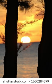 Portrait view of a sunset dipping in the ocean, with the silhouette of pine trees