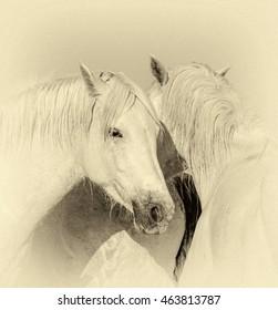 Portrait of the White Camargue Horse in Parc Regional de Camargue - Provence, France (stylized retro)