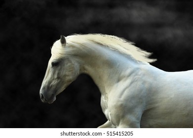 Portrait of a white horse galloping