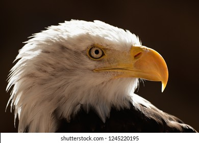 Eagle On Black Background Images Stock Photos Vectors Shutterstock