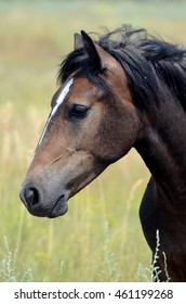 Portrait of a wild horse in the field