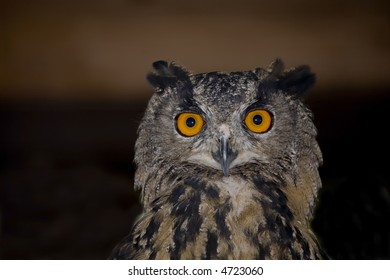Portrait of wise owl with beautiful eyes - Shutterstock ID 4723060