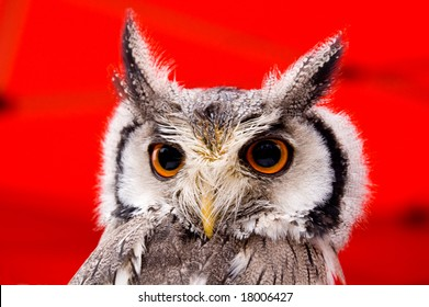 Portrait of wise owl with magic yellow eyes