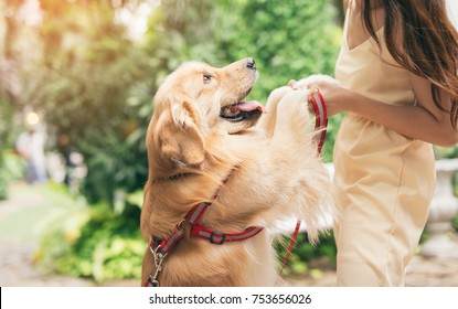 Portrait of woman with dog golden retriever in park with sunset out door
