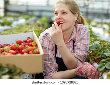 Portrait of woman  horticulturist in apron holding in hand strawberry in   greenhouse