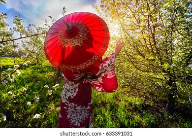 Portrait of woman in kimono with red umbrella in the garden with cherry blossom at sunrise