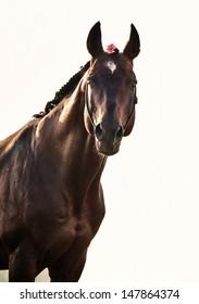 portrait of wonderful   bay  sportive  stallion