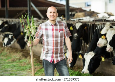 portrait of worker collecting grass with pitchfork in cows barn
