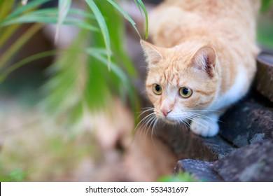 portrait of yellow cat