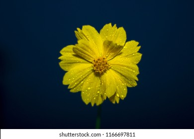 portrait of yellow flower with rain drops