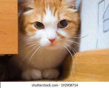 Scared Cat Stock Images, Royalty-Free Images & Vectors ...Scared Kitten Hiding