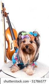 portrait of the  yorkshire terrier with violin
