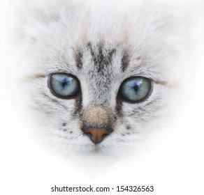 Portrait Of Young Cat On White Background