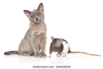 Portrait of a young Cat and Rat on a white background