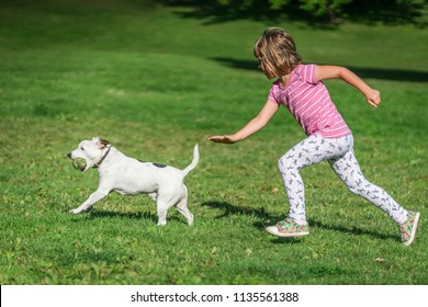 Portrait of a young caucasian girl chasing small dog who caught tennis ball