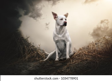 portrait of young cute purebred labrador retriever dog puppy pet sitting on beach in front of dramatic sky