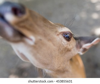 portrait of a young deer in zoo