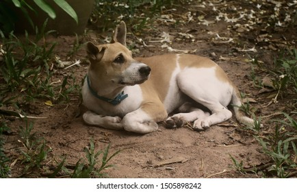 Portrait of young dog lay down on ground and looking up