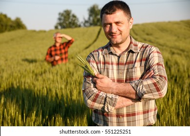 Portrait of young farmer in a field examining wheat crop.