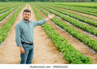 Portrait of young farmer standing in strawberry field with his arms outstretched. farmer male looking at camera with raised arms outstretched