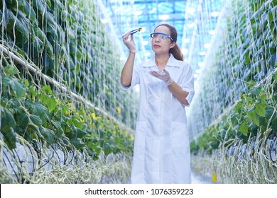 Portrait of young female scientist checking quality while studying breeding in greenhouse of agricultural plantation, copy space