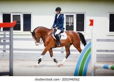 portrait of young gelding horse and adult man rider trotting during equestrian showjumping competition in daytime in summer