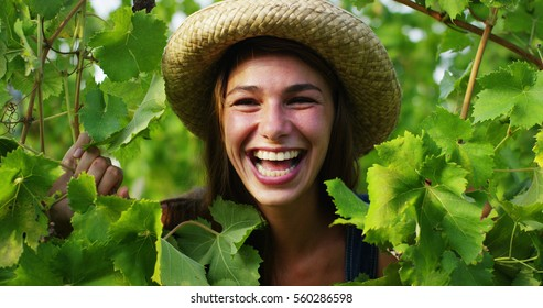 The portrait of young laughing woman between the vineyard leaves during harvesting  in vineyards , collects the selected grape. biological concept id , organic food and fine wine handmade