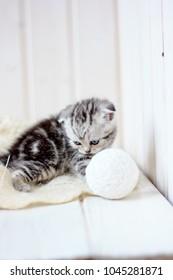 Portrait of young little kitten