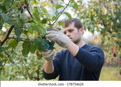 Portrait of young man pruning branch