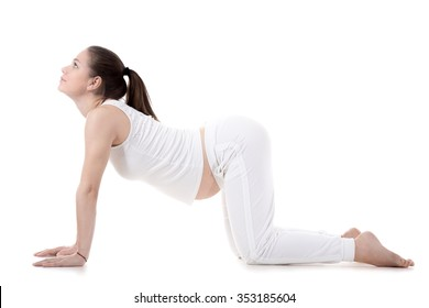 Portrait of young pregnant fitness model in sportswear doing yoga or pilates training, Cow Pose, Bitilasana, asana for flexible spine and shoulders, often paired with Cat Posture, studio, isolated