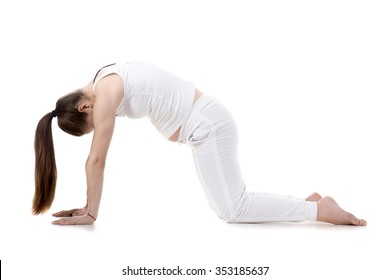Portrait of young pregnant fitness model in sportswear doing yoga or pilates training, Cat Pose, Marjaryasana, asana for flexible spine and shoulders, often paired with Cow Posture, studio, isolated