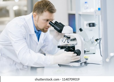 Portrait of young scientist looking in microscope while working on research in medical laboratory