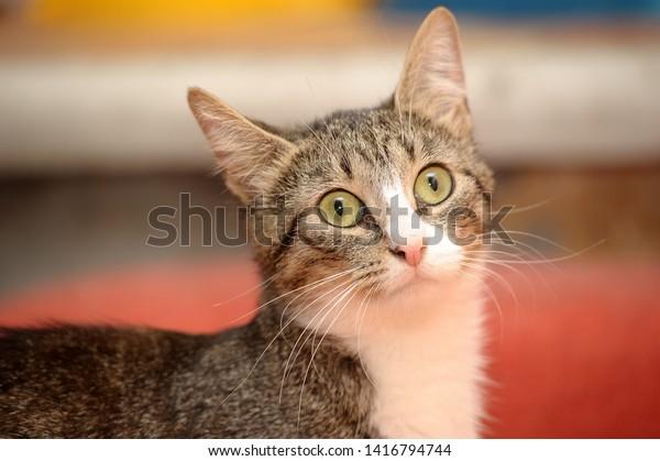 Five Cat Food Factors That Discourage Feline UTD
