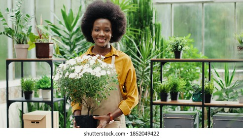 Portrait of young woman flower shop manager standing at work with plant in hands and smiling to camera. Happy African American female worker in floral house welcomes clients. Floristry concept